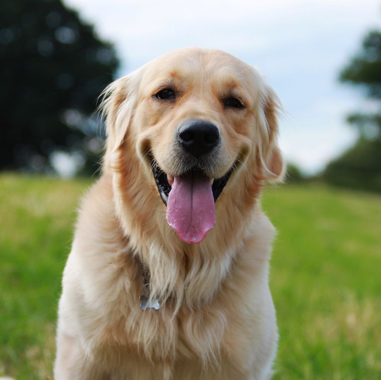 The 10 Best Dog Friendly Cities In The Uk Have Been Revealed Dog