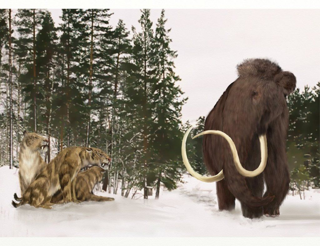 Woolly mammoth passing by a clan of homotheriums by Leogon