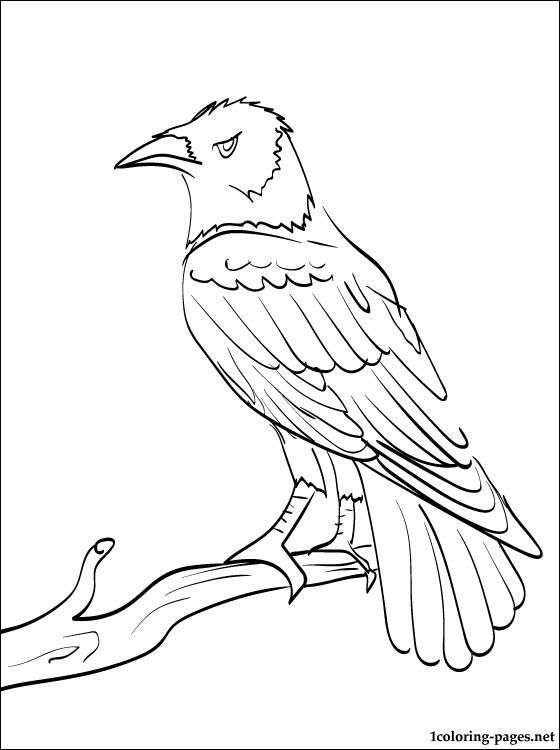 printable animal coloring page of a raven from our coloring book site