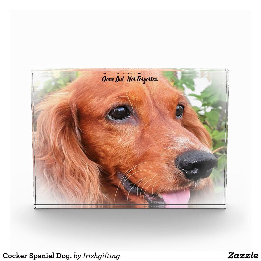 Cocker Spaniel Dog. Acrylic Award Zazzle.co.uk Cocker