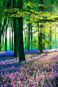 Landscape View Nature Forest Scenic Vertical Scenery Landscape Beautiful Landscapes