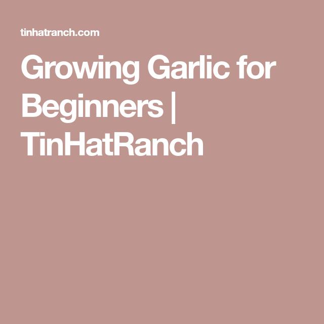 Urban Vegetable Gardening For Beginners: Growing Garlic For Beginners