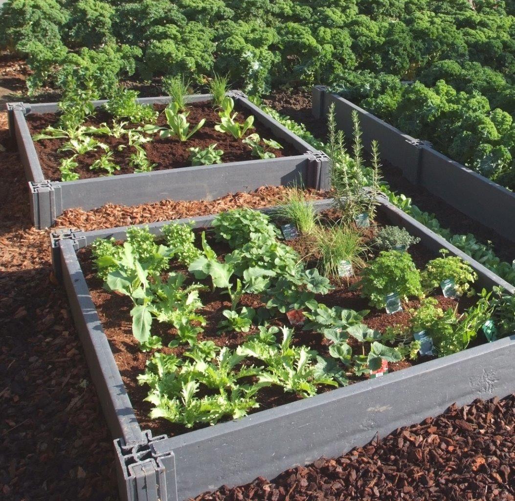 Carr potager recycl cologique carr s potager et ch ssis garden borders plants et garden - Carre de jardin potager ...