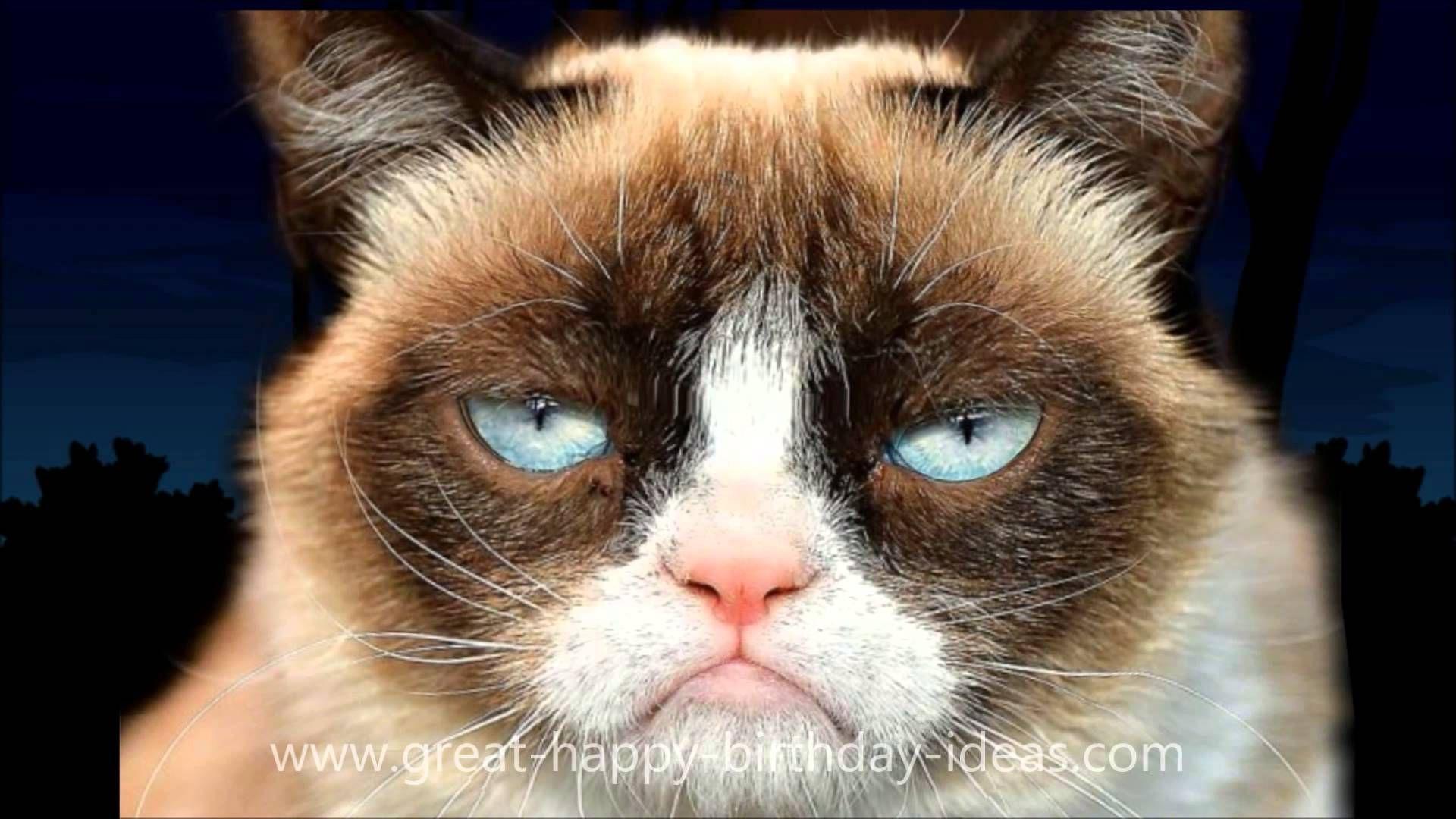 Grumpy Cat Happy Birthday Song Just for Fun! Pinterest