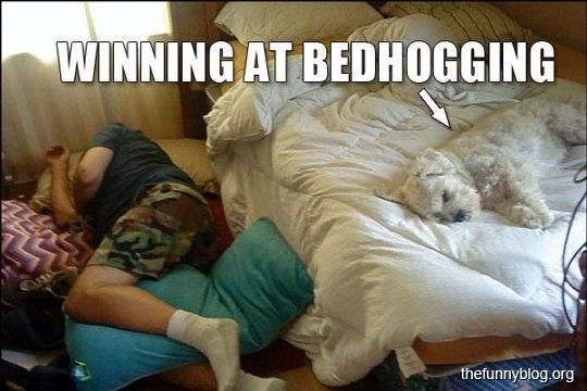 15 Memes Only Dog Owners Will Understand Funny Dog Beds Sleeping Dogs Crazy Dog