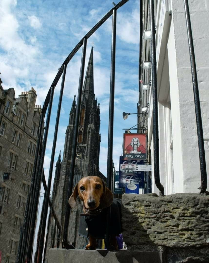 Dachshund Visit Edinburgh Edinburgh City Visit Britain