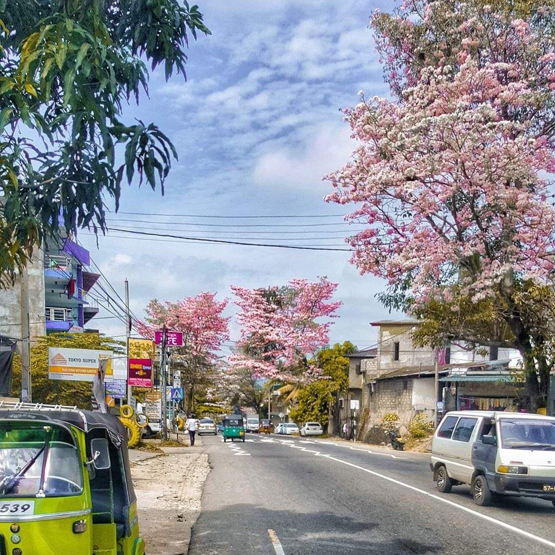 The season - Sri Lanka | Sri lanka, Street view, Scenes