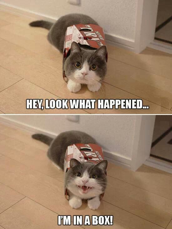 Cute Funny Cat Pictures : funny, pictures, Found., Funny, Photos,, Animals,
