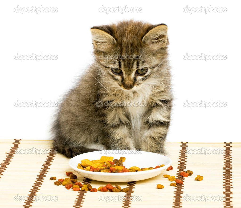 Small Kitten Eating Dry Cat Food Stock Image Cutekitten