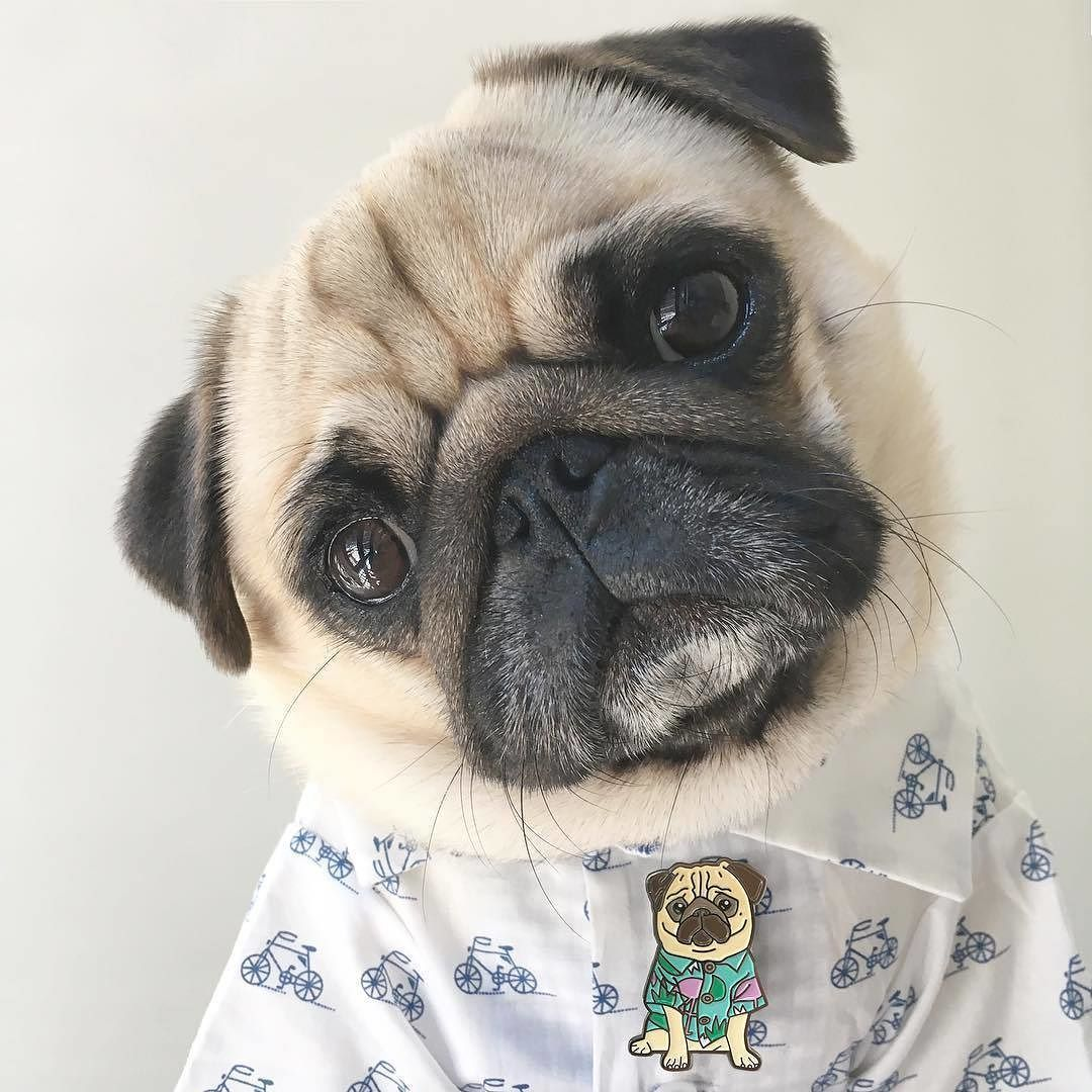 Check Out My Limited Edition Moose The Pug Pin Double Tap For