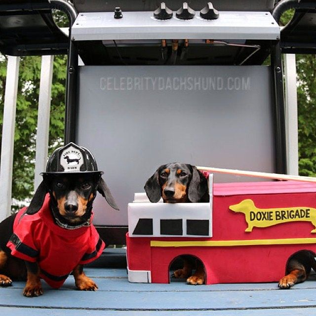 Firefighter Dachshunds Read More About Our Misadventures At
