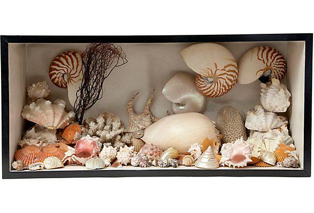 James Sansum Gallery  Sea Shell Diorama
