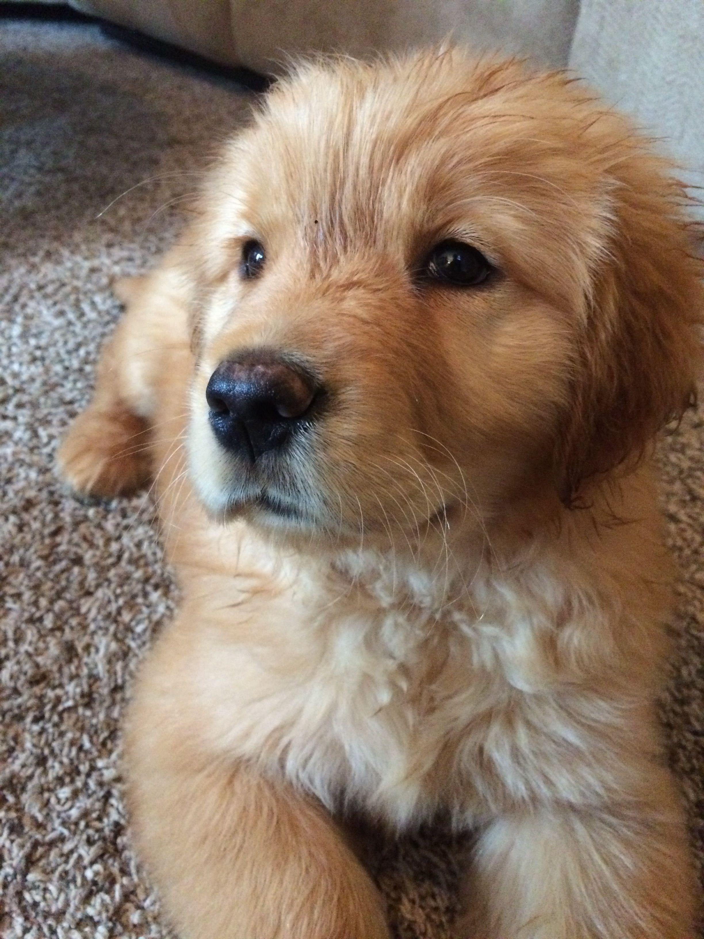 Pin by marisa tamargo on lo mejor del mundo pinterest dog