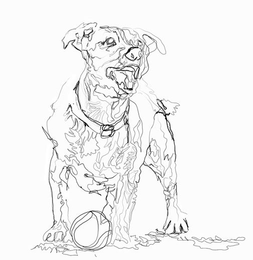 Contour Line Drawing Dog : Edward degas drawings mhsartgallerymac contour