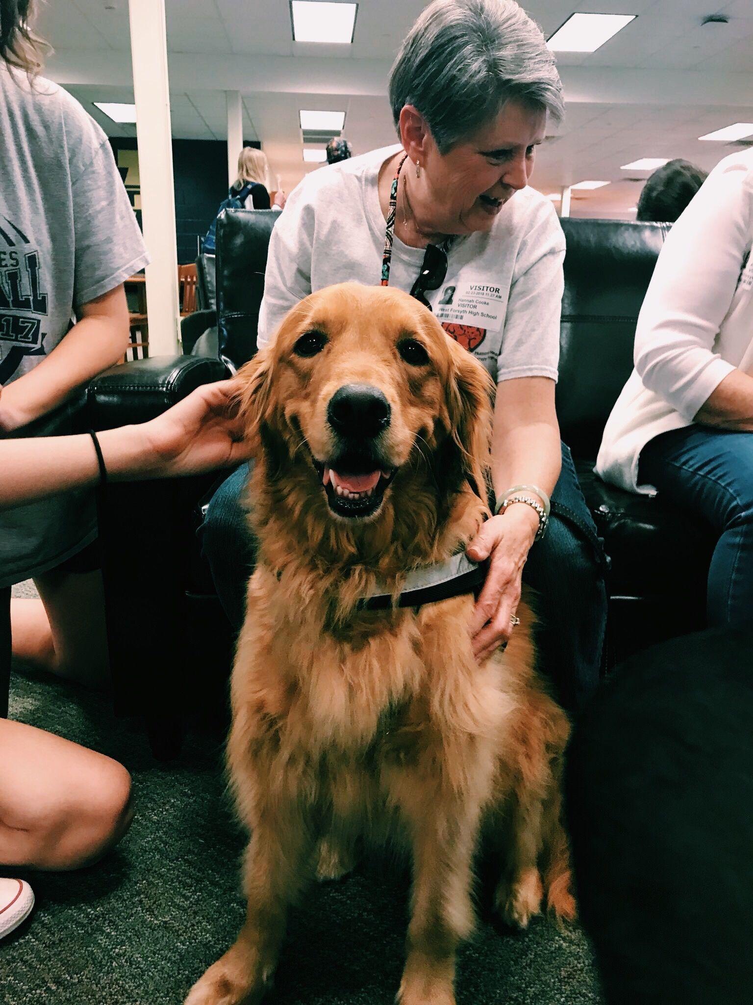 Idea By Bailey On Dogs Golden Retriever Puppy Golden Retriever