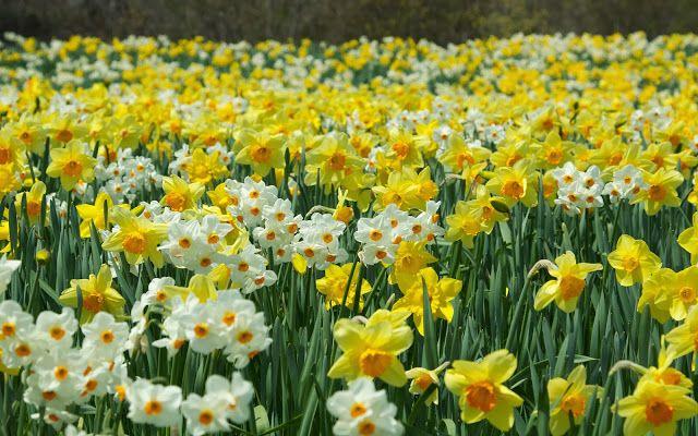 Fotografias lindas de flores | Fotos Bonitas de Amor | Imágenes Bonitas de Amor