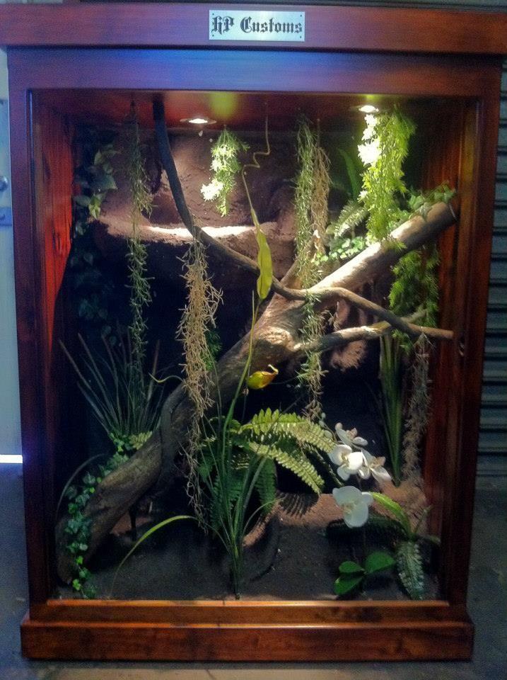 Https Www Facebook Com Pages Hp Customs Custom Reptile Enclosures 572704122760765 Whites Tree Frog Reptile Enclosure Reptile Habitat