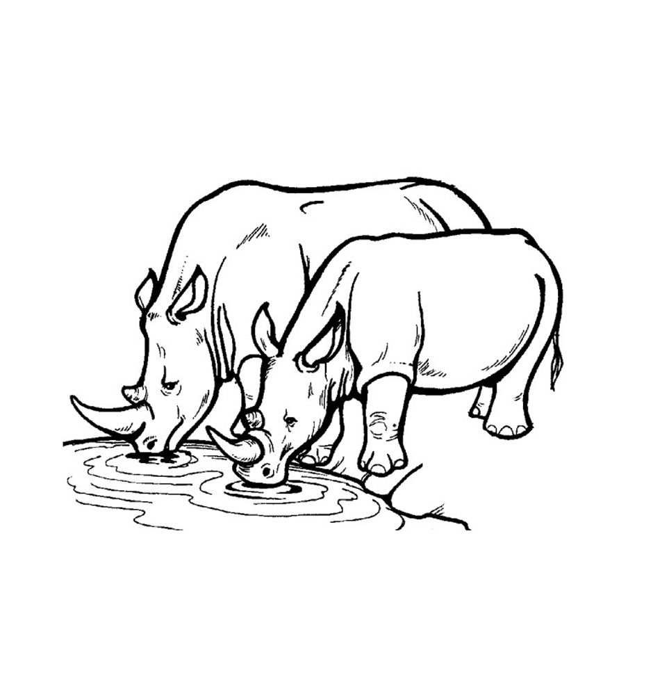 Free Printable Rhinoceros Coloring Pages For Kids Animal