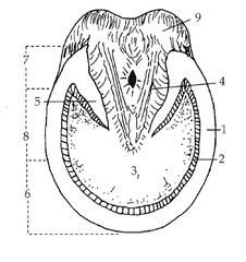 Image result for horse anatomy fill in the blank | Horse ...