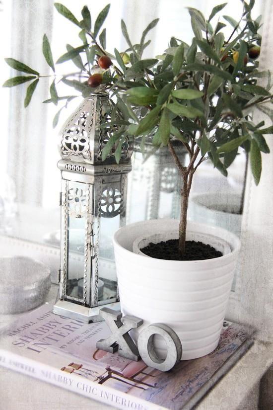 Un olivo en decoracion