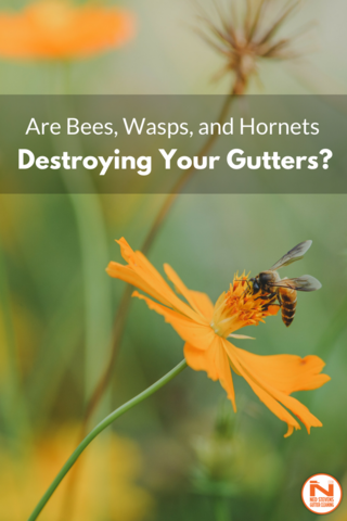 Are Bees Wasps And Hornets Nesting In Your Gutters Gutter Talk Gutters Wasp Wasp Nest