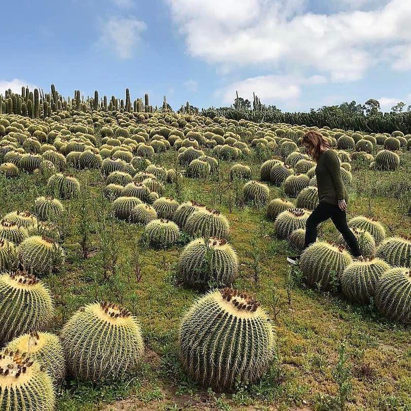 Cactus fields!! cactus garden goals? 📷 by thecactuslady