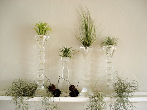 Other Uses For Candle Holders Air Plant Display Air Plants Plant Display Ideas