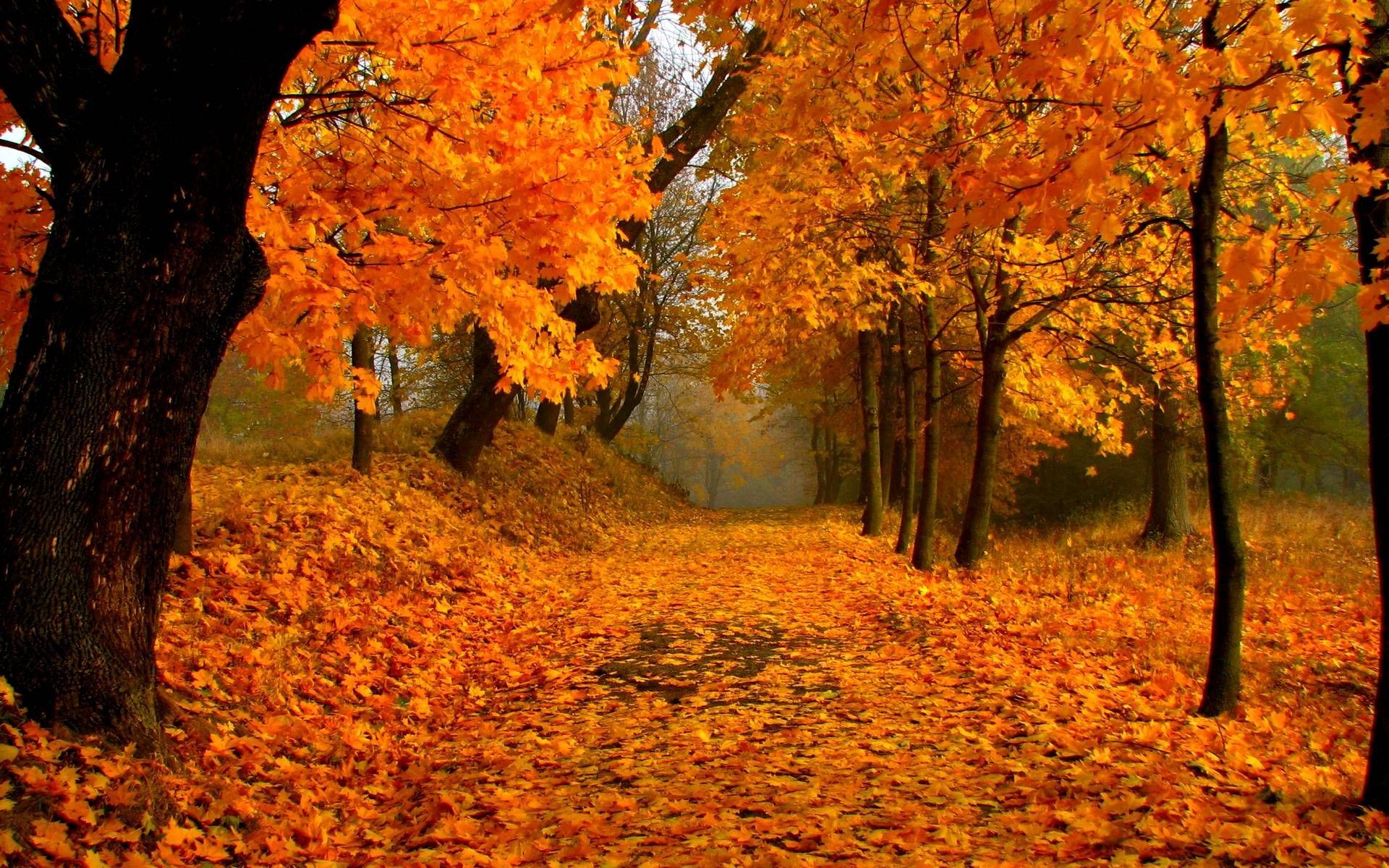Free Download Fall Foliage Wallpaper Scenery Wallpaper Autumn Scenery Scenery Photos