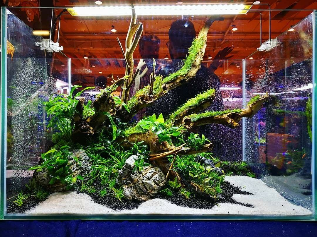 60x40x40h cm layout with talawa wood and seiryu stone from the live rh pinterest com