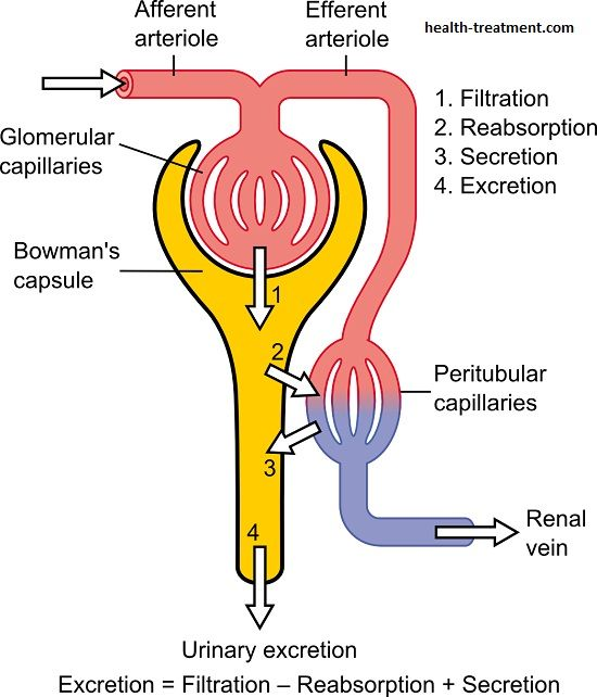 Kidney Function What Is The Function Of The Kidneys Health