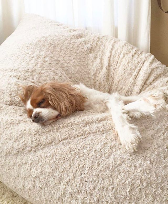 lovesac pillow bean bag chairs see more hereu0027s to cozy naps and dreams of endless belly rubs to all of our scruffy canine