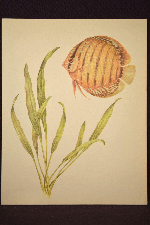 Beach House Decor Tropical Fish Wall Art Aquarium Fish Print Aquatic ...