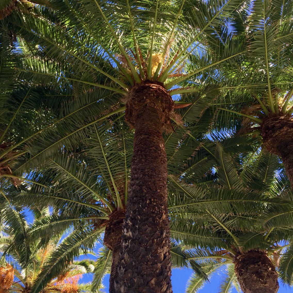 Beautiful canopy of palms
