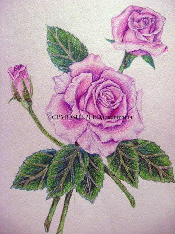 Original Colored Pencil Rose Drawing On Watercolor By Kidichimama Flower Drawing Pencil Drawings Of Flowers Pencil Drawings