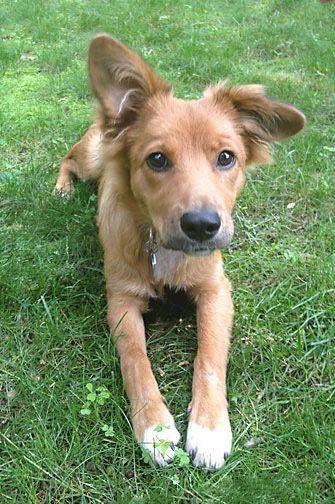 one floppy ear puppy