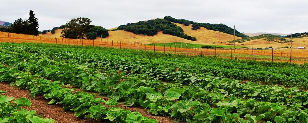 Open Field Farm, Petaluma Farm, Open field, Family farm