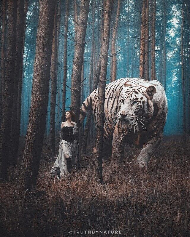 Strength and beauty. White Tiger. Surrealism in Animal Photo Manipulation. Click the image, for more art by truthbynature.