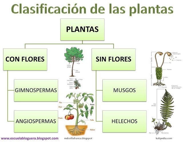 Escuela Bloguera Clasificación De Las Plantas Clasificación De Las Plantas Polinizacion De Las Plantas Informacion De Plantas