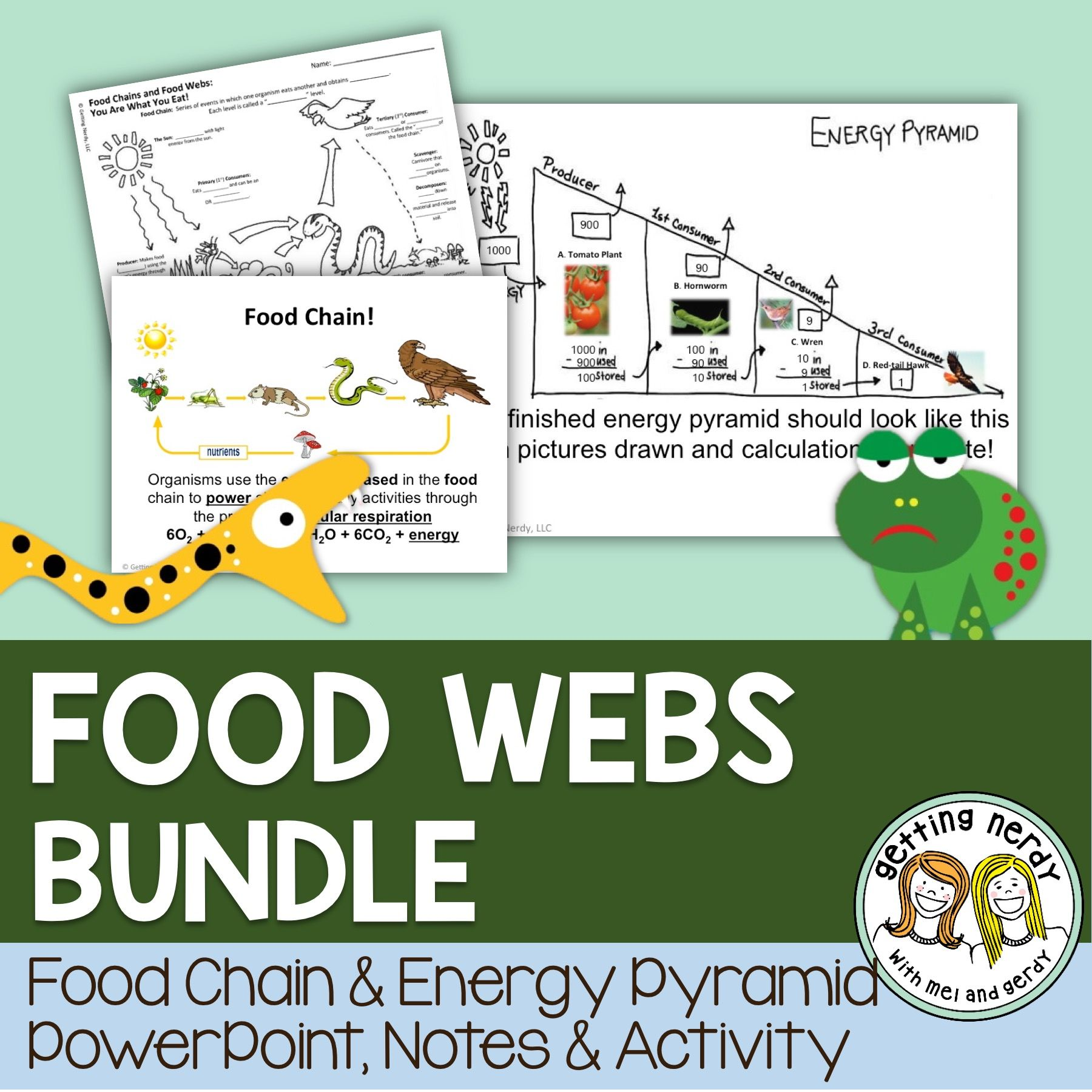 Food Chains Food Webs and Energy Pyramids Pinterest