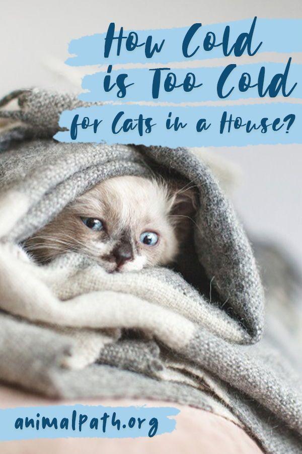 900 It S A Cat S World Ideas In 2021 Cat Care Cats Cat Behavior
