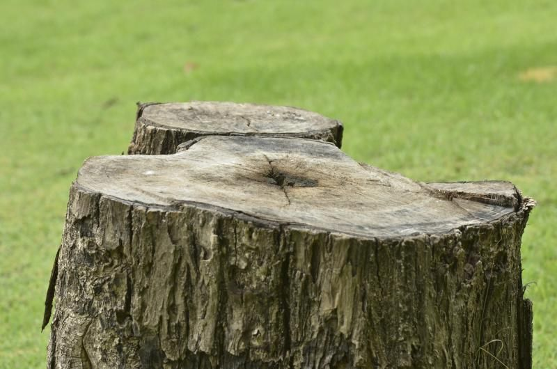 how to kill a tree stump with epsom salts