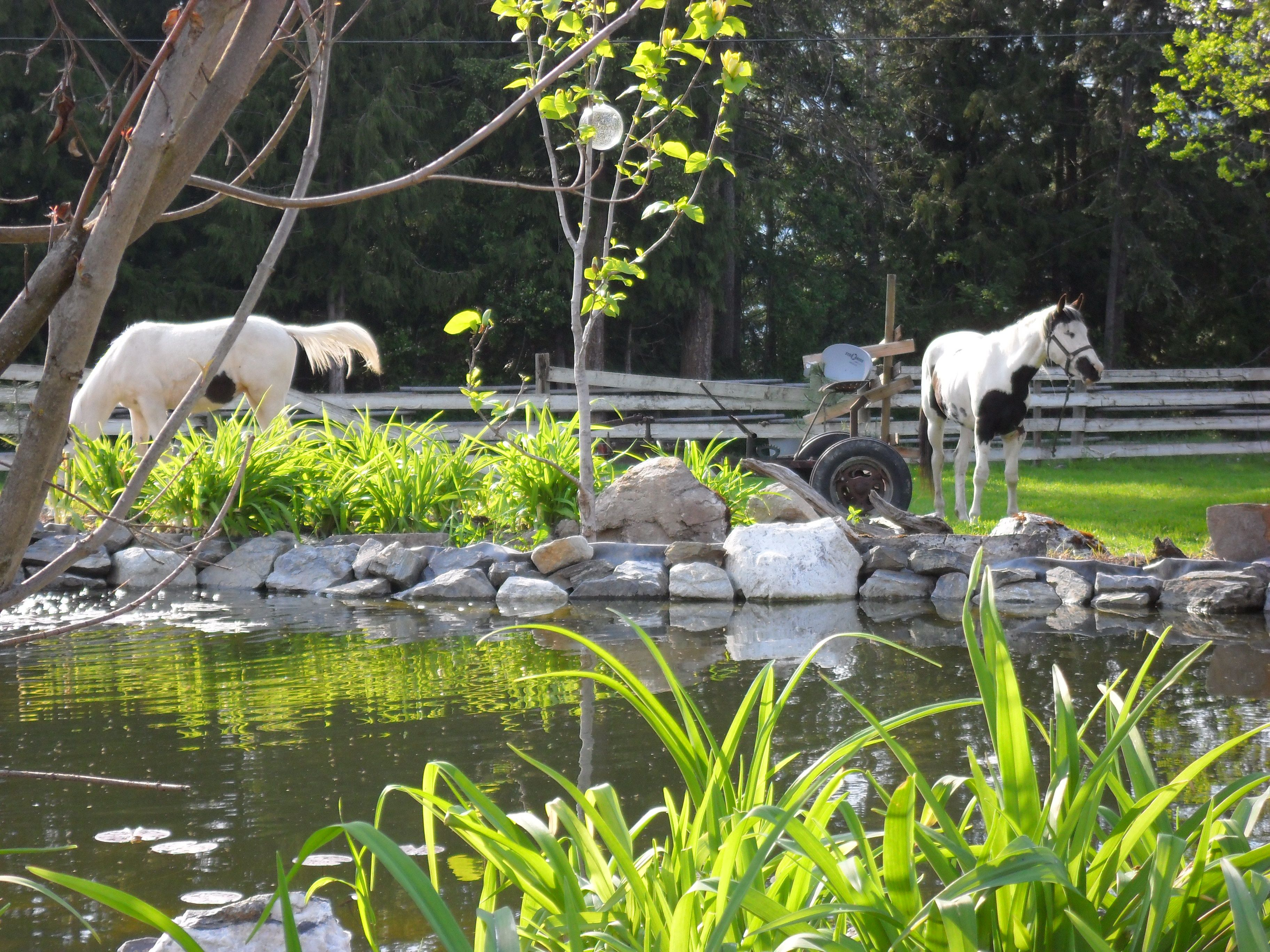 A large water feature with pond stream and waterfall for Koi pond kelowna