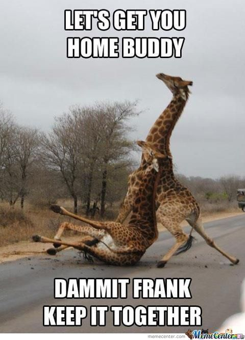 Funny Hang In There : funny, there, There, Quotes, Google, Search, Funny, Animal, Memes,, Humor, Inappropriate,