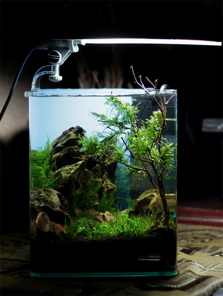 Dennerle nano cube contest 2013 quality test results for Aquarium nano cube