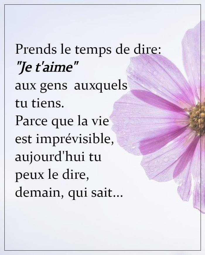 """Citation JE T'AIME et Proverbe pour dire """"Je t'aime"""