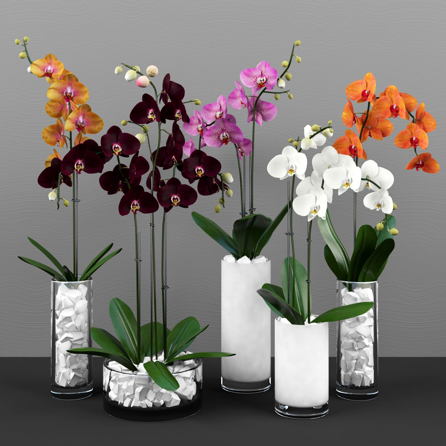 3d Phalaenopsis Orchids Model 251 Free Download Orchid Flower Arrangements House Plants Decor Plant Decor