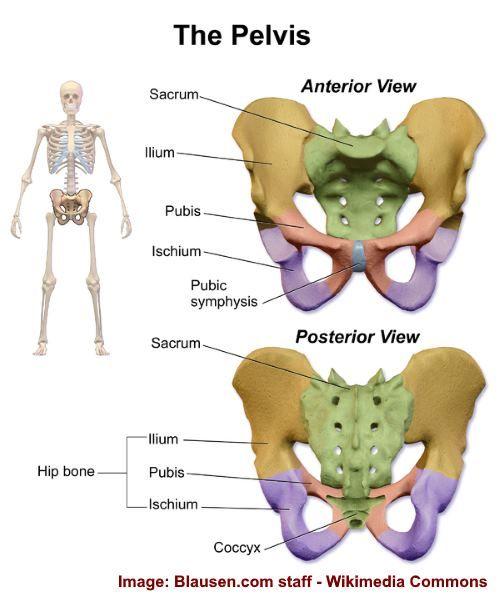 20+ Pelvic Bone Pain Causes and Natural Treatments