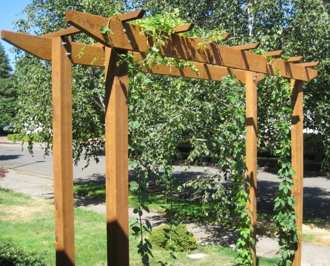 Hops trellis ideas garden for Garden trellis ideas