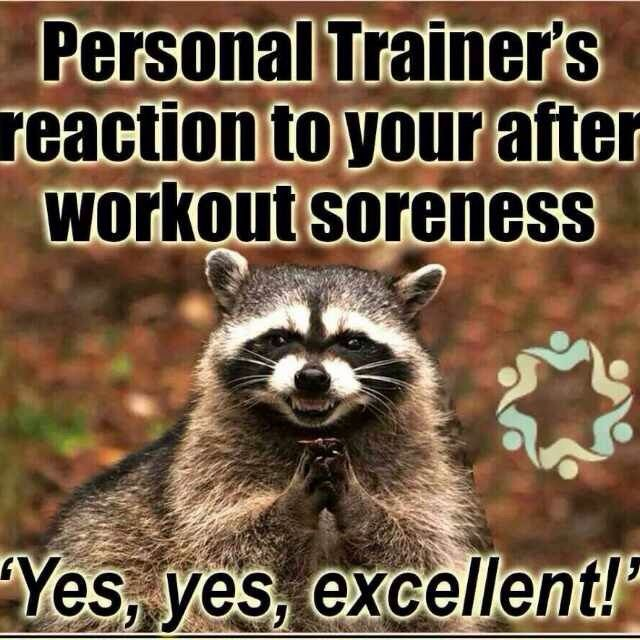 Personal Trainer Quotes Funny: Best 25+ Personal Trainer Meme Ideas On Pinterest