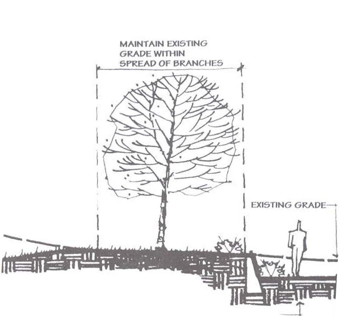 Grading Around Trees Ref